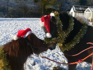 Santa's ponies